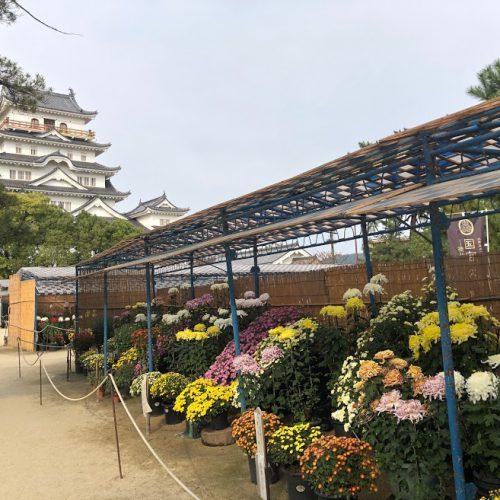 菊花展福山城